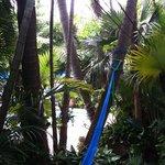 pool view through gardens