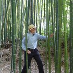 in the bamboo jungle!