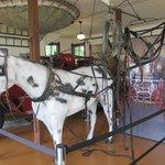 Horse Halter & Reins