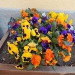 fiori ingresso