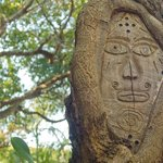 Carvings will be found in various trees.
