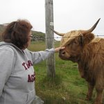 "Meeting the ""next door"" neighbors... Loved the Highland Cattle. :-)"
