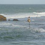 Stilt Fisherman on the local beach