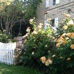 rosiers en fleurs dans le jardin