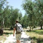 breve passeggiata sotto gli ulivi dal villaggio per arrivare alla spiaggia