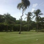 A clever tree, avoiding the golfballs!