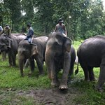 Mekong Elephant Camp