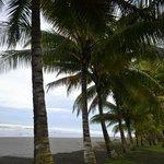 THE SEA THRU PALMS