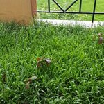 unkept overgrown grass with water in balcony