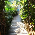 """Jungle"" Gardens - Walkway to the Rooms"