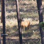 Deer on wild Horse Island