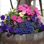 Annual Flower Display
