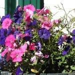 More Flower Barrels