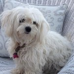 The beautiful Rozi - the family's gorgeous dog