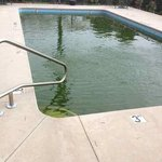 Truly disgusting pool, overrun with algae.