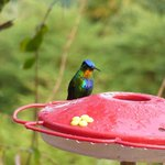 Hummingbird station in front of the restaurant