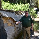 Our Guide Steve at Mariposa Grove of Gaint Sequoias