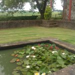 Lilly pond