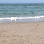 great day at the beach perfect place to bring ur dog