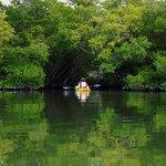 Entering Mangrove Trail