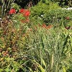 Ambrosia Gardens Bed & Breakfast Foto