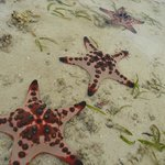 Starfish in lagoon