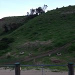Phillip Island - some of the burrows were the penguins home