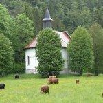 Kapela Kristusa Kralja