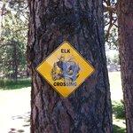 Elk are prevalent