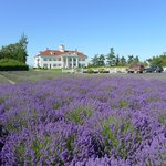 hotel with lavender