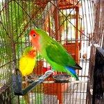 otelin maskoları cennet papağanları