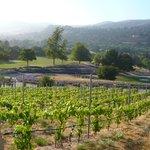 The new vineyards