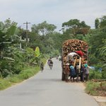 Typical Vietnam  countryside