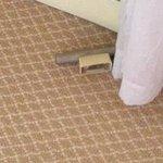 unidentified object on plush carpet