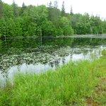 Pond at Glenview Cottages, mid-June 2013