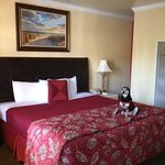 the bed, very comfy. pet friendly rooms.