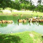 animaux étang