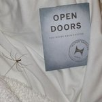 """""""Friendly"""" spider suddenly appeared from nowhere as I was about to check out of room."""