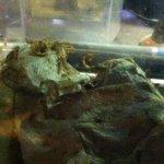 Rattlers & Reptiles Foto