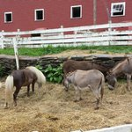 animals in farm besides cheese store