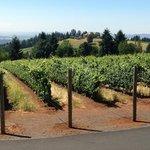Oregon wine country vineyard