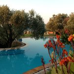 Pool area with olive trees and flowers