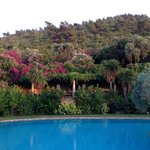 Olive trees and flowers surrounding the pool