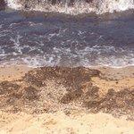 Spiaggia (particolare)