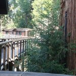 redwoods from deck