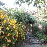 The jasmine bush on the pergola.