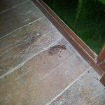 Un invité clandestin entré (et sorti) par un des trous du plancher