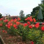 lovely rose garden