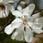 Spring at Cantigny