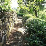 Tea Plantation Path